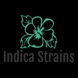 Indica Flowers